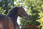 Southgerman stallion days