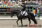 Approved stallions in youngster dressage finals