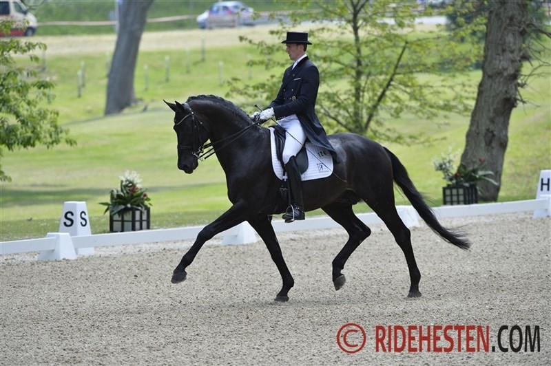 Time for young dressage talent in Verden