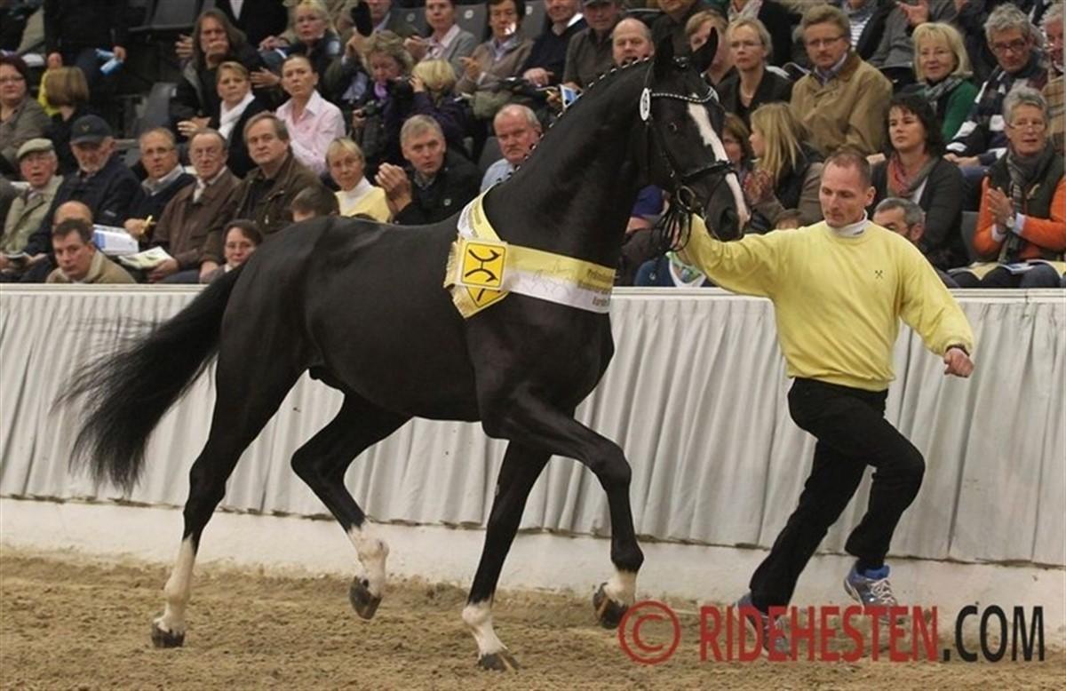 verdens dyreste hest