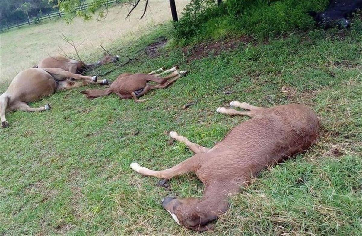 7 heste død i lynnedslag - Ridehesten.com