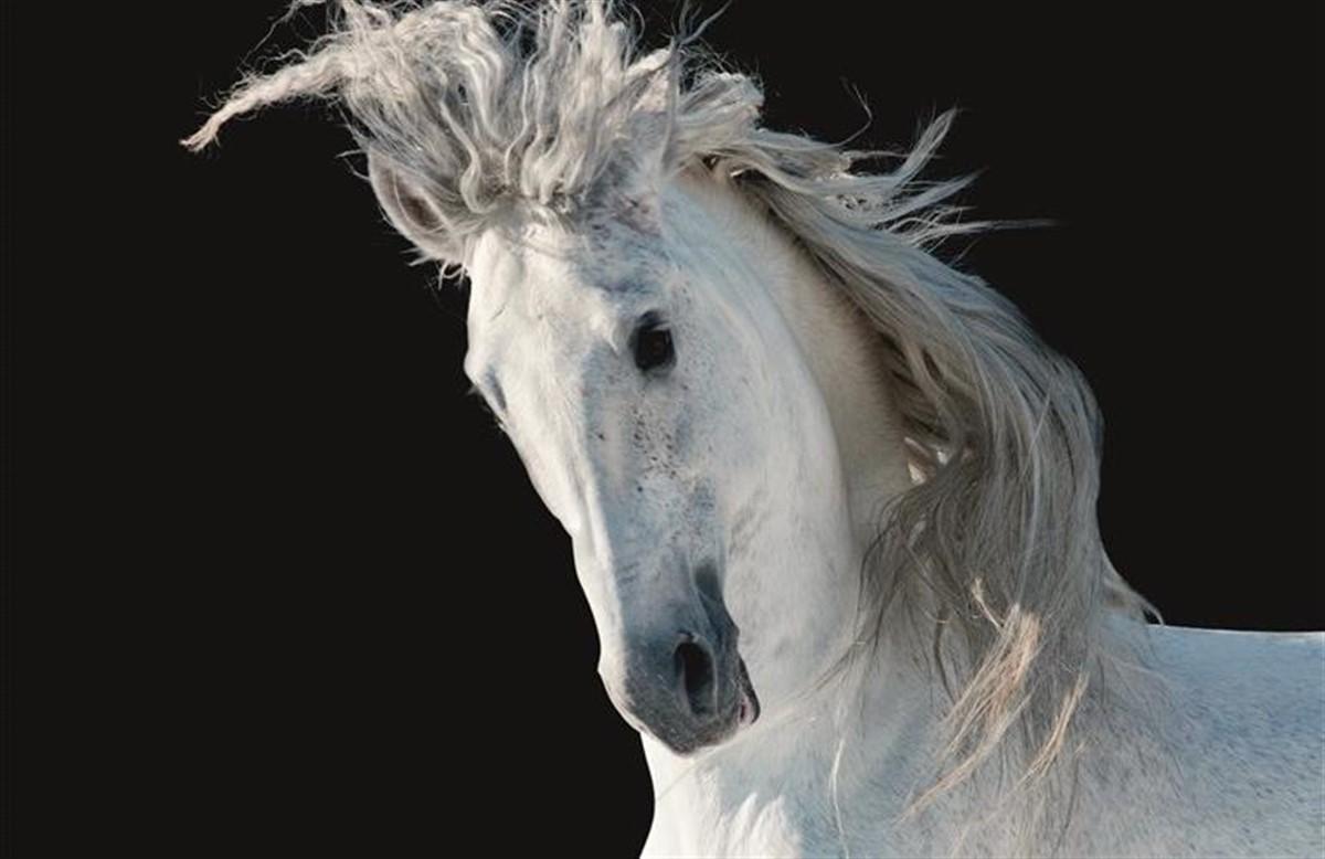 kongeriget danmark hesteforsikring