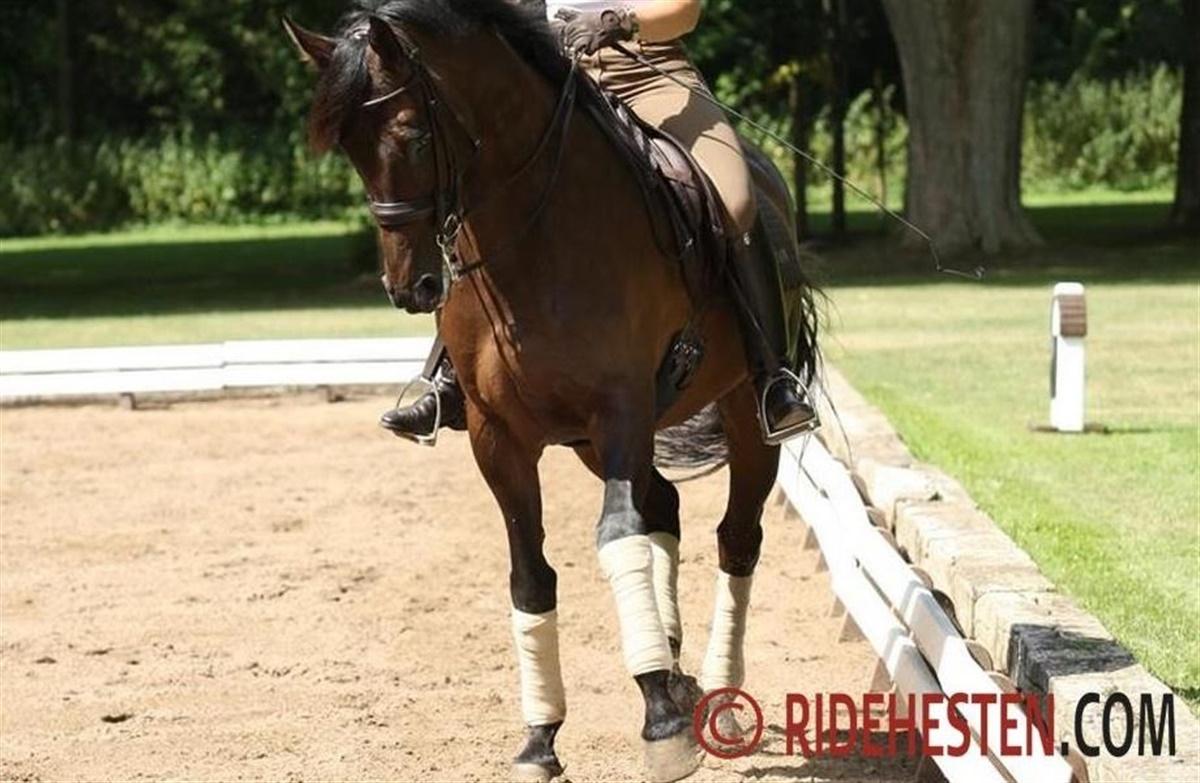 hest taber bagben