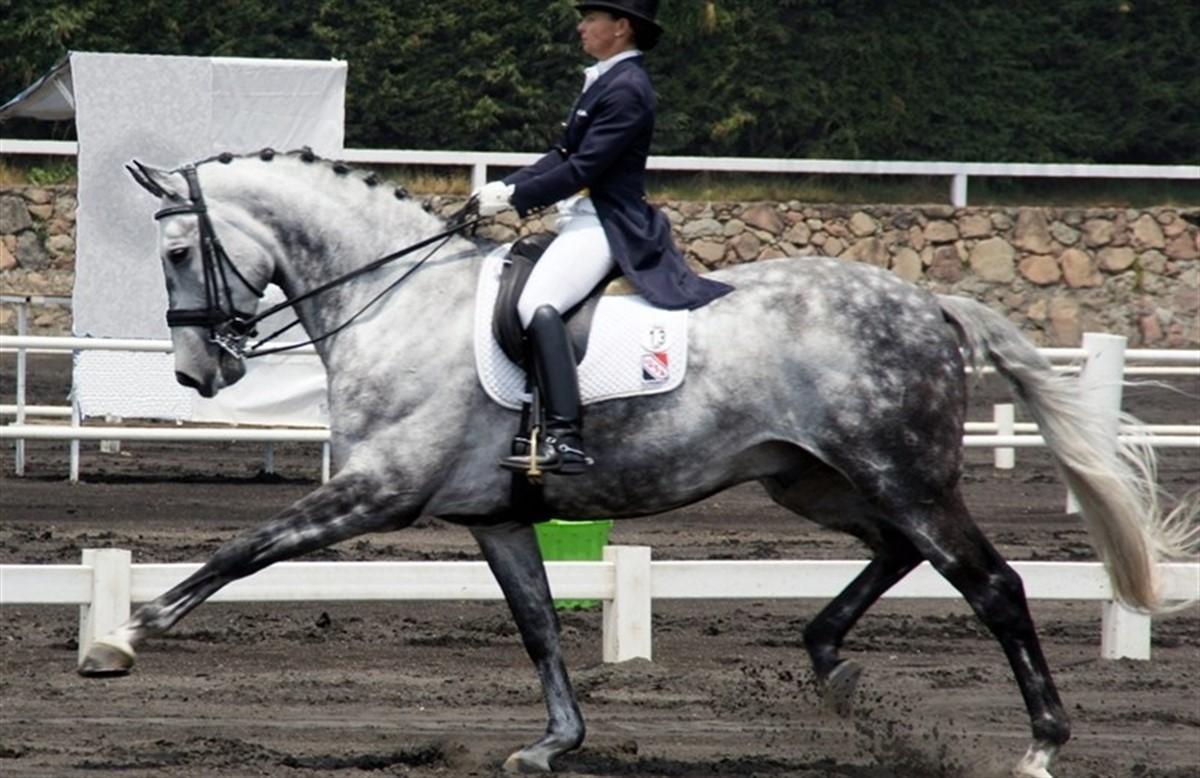 skimmel hest