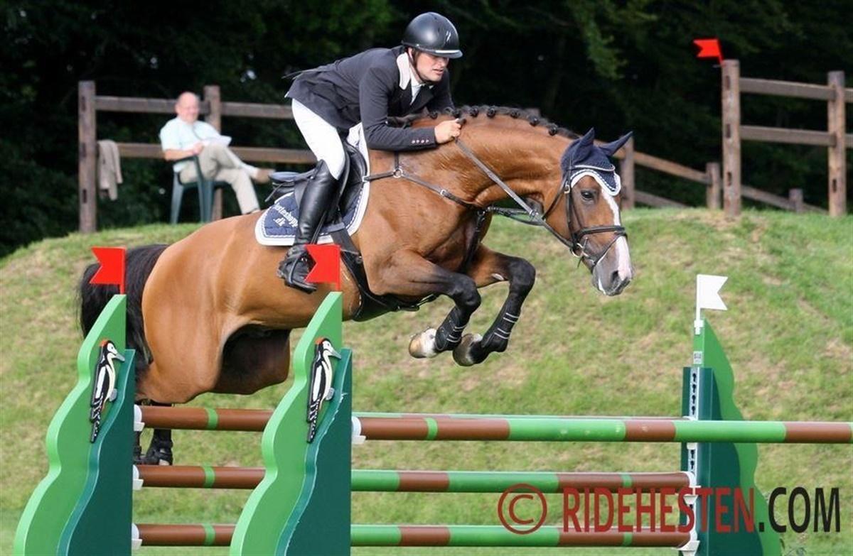 flemming schultz heste