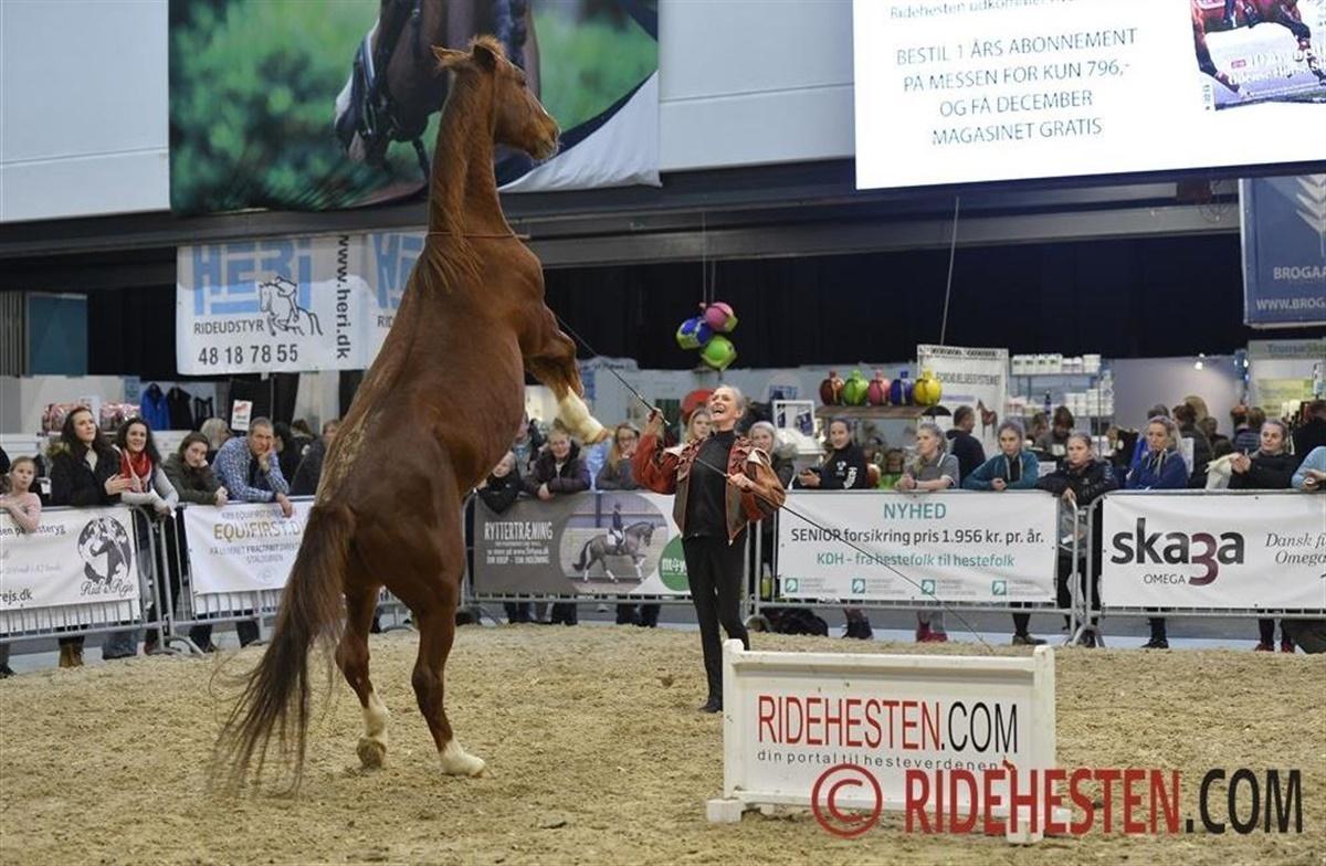 hillerød horseshow