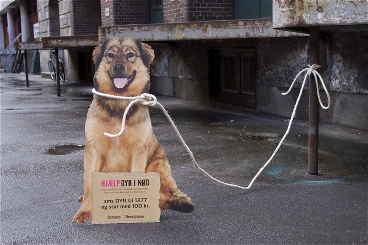 dyrenes beskyttelse københavn