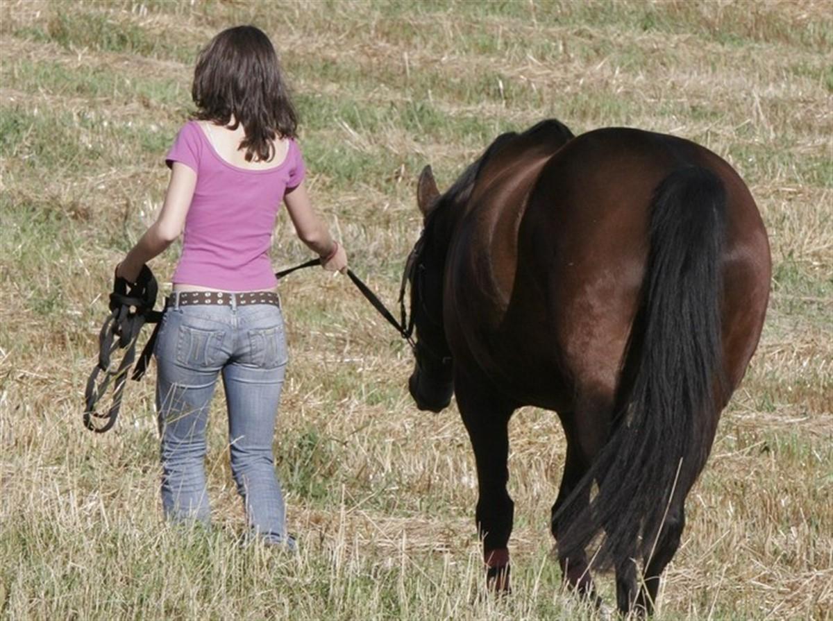 heste heste og pige sex sex