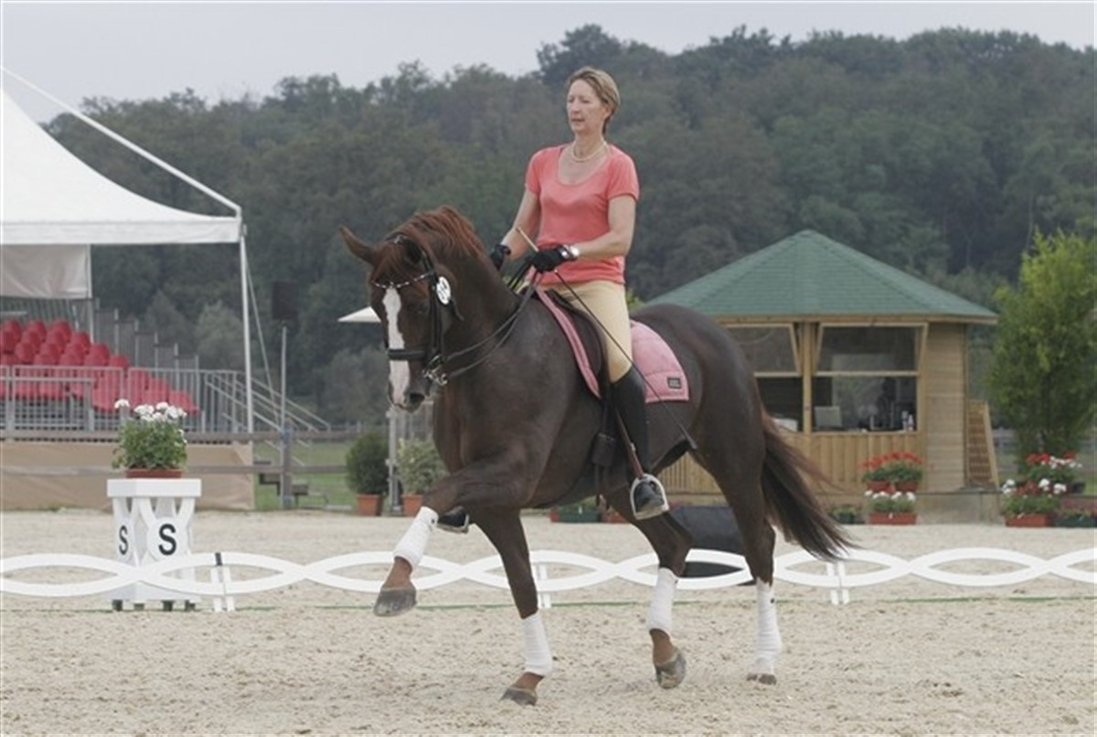 aflivning af hest