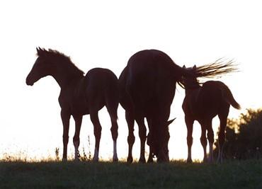 Billedresultat for dyrevelfærd rideskole