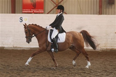 Hyggeligt Valentine Dressage Show i Nr. Aaby