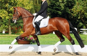 Deep Love til Helgstrand Dressage