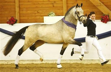 Over 400.000 dkk for en 2½-års pony