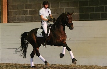 Helgstrand Dressage video