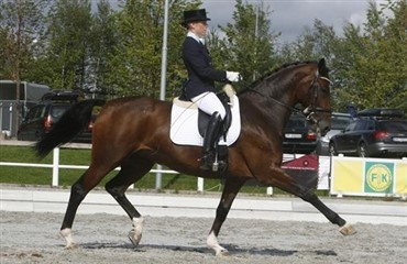 DV-hoppe tager 2. pladsen i Grand Prix Special i Zwolle