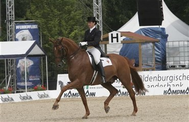 DV Grand Prix-hest Maximus pensioneret