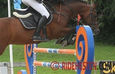 Riders Cup: Internationalt stjernedrys