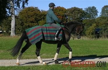 Hestepiger datant