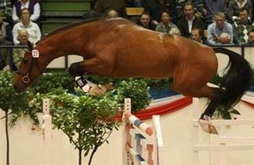 450.000 Euro for hingst til Stutteri Ask
