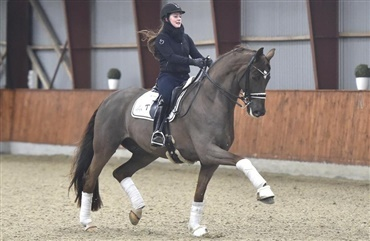 Dufours Bohemian nu Grand Prix-hest (video)
