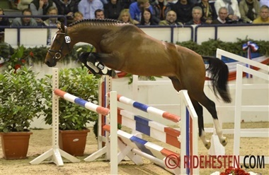 Holstenerhingsten Loveless til Kent Farrington