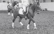 Hest til salg - Diamond chagall
