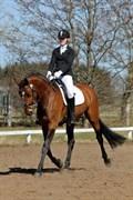 Hest til salg - GRØNTANG SUPREME
