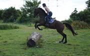 Hest til salg - ENGHØJS PIA