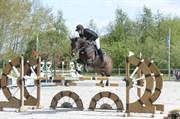 Hest til salg - JACONELLA D