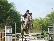Hest til salg - HARRY