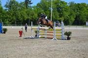 Hest til salg - ELLELY'S LASALL