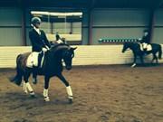 Hest til salg - DAMVADHOLMS PURE PROUDNESS