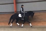 Hest til salg - SAN DIEGO