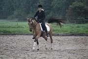Hest til salg - JURRIAAN
