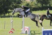 Hest til salg - Argon