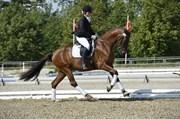 Hest til salg - VONG'S RAVINI