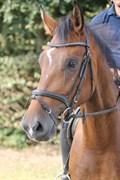Hest til salg - Q-BACK N