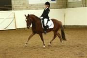 Hest til salg - CAPACITY BLOND