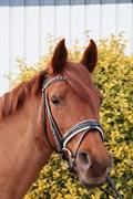 Hest til salg - JAVA SURPRISE
