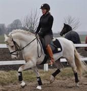 Hest til salg - VALHALLAS (DK) LIMELIGHT (OS)