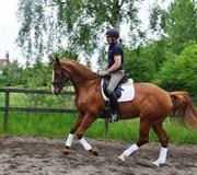 Hest til salg - GULLHØJS LET'S DANCE