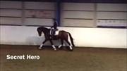 Hest til salg - SECRET HERO LIBEROHT