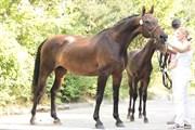 Hest til salg - LAREDO'S SILENTIA