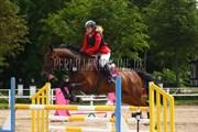 Hest til salg - MERCEDES