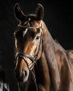Hest til salg - LISETTE