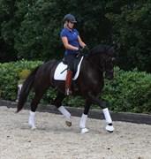 Hest til salg - HEMMINGWAY