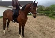 Hest til salg - LYKKEGÅRDS CON AIR