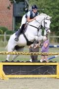 Hest til salg - SMART 16