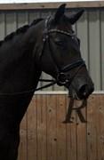 Hest til salg - NOUGAT