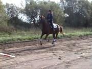 Hest til salg - ELTON P